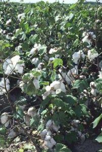 import-export de coton